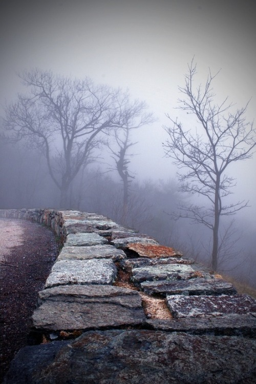 Into the Mystic, Shenandoah Valley, Virginia photo via deborah