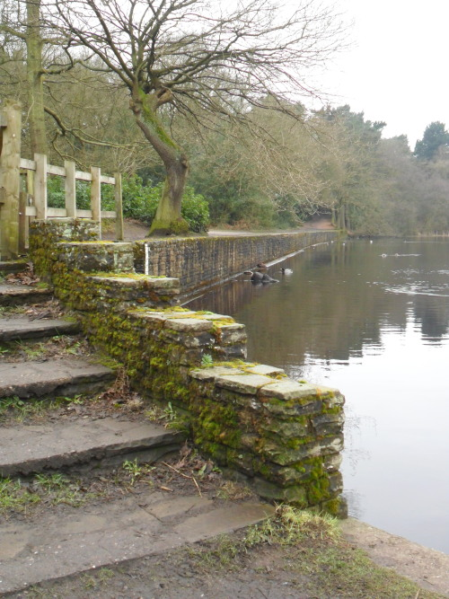 Mossy steps at Bracebridge Pool, Sutton Park, Sutton Coldfield, England