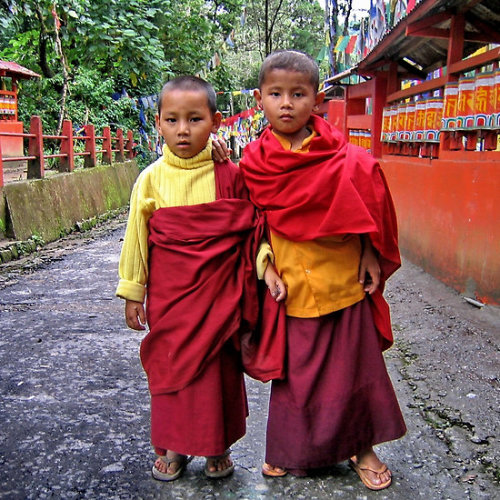 svaha3:  young monks. sikkim, india