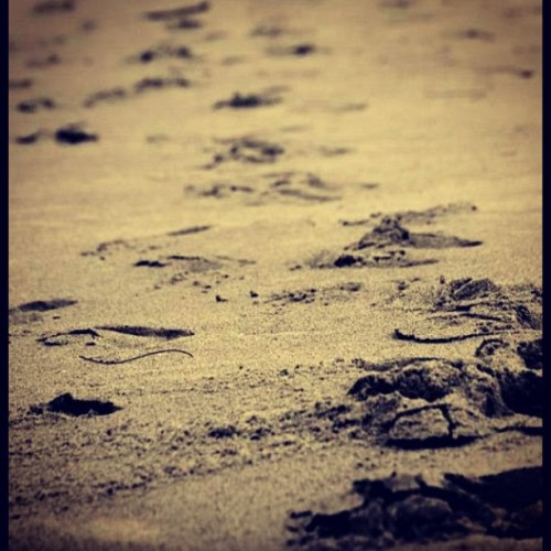 Our footsteps show where we have been, but we can always change the direction of where they're headed <3 #photography #footsteps