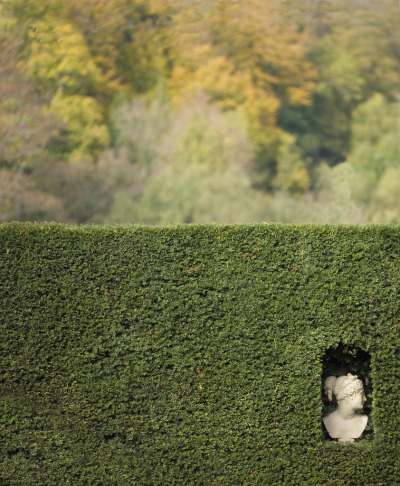 mordmardok:  head in a hedge (di stumayhew)