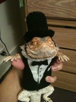 the-absolute-funniest-posts:  This is my bearded dragon, Irwin, in his dapper tux.  (via/follow The Absolute Funniest Posts Blog)