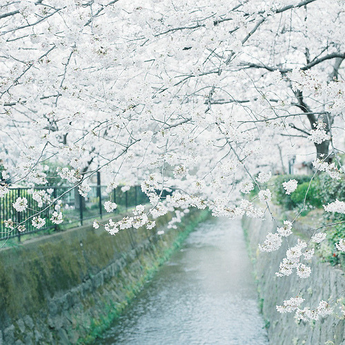 my-aeipathy:  5 1 3 (By kajico**)
