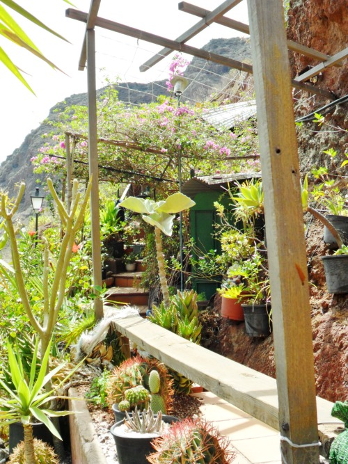 Tropical plants and cactus, Guaydeque Cave Dwellings, Gran Canaria, Canary Islands.
