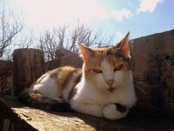 10 year Old Cat is Resting in the Sun - Public Domain Photos, Free Images for Commercial Use