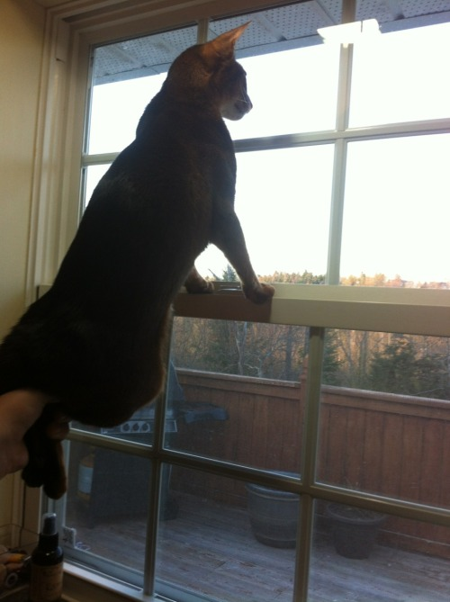 onlyprofessionalsspellitunikorn:  Dyllon's new way of birdwatching without the window screen in the way of his view.