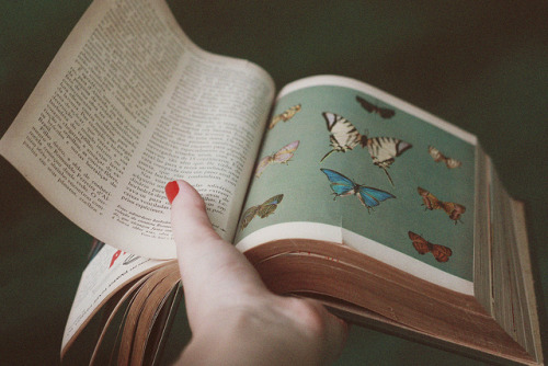 fragilles:  untitled by Adrielly . on Flickr.