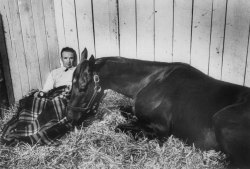 horsesofyore:  life:  In 1955, LIFE covered what would prove to be a classic Kentucky Derby, paying special attention to the eventual (longshot) winner — and his utterly singular trainer. See the photos here. (John Dominis—Time & Life Pictures/Getty Images)  Swaps. 1955. What a horse!  I started another Tumblr, dedicated entirely to vintage photographs and ancient depictions of horses. I haven't gotten into the posting groove yet, but hope to soon.