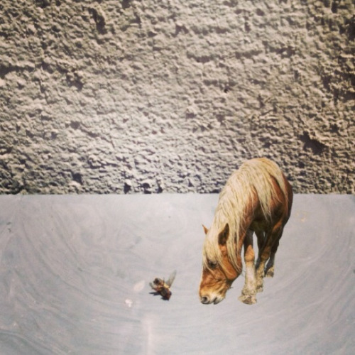 This tiny horse is reflecting on mortality.