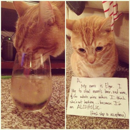 cat-shaming:  it has come to this.