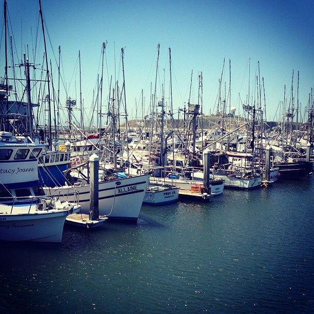 HALF MOON BAY. ⛵⛵⛵ #boats #crabs #fish #halfmoonbay #water #california #sunday #scenic #view #bay #lovinit