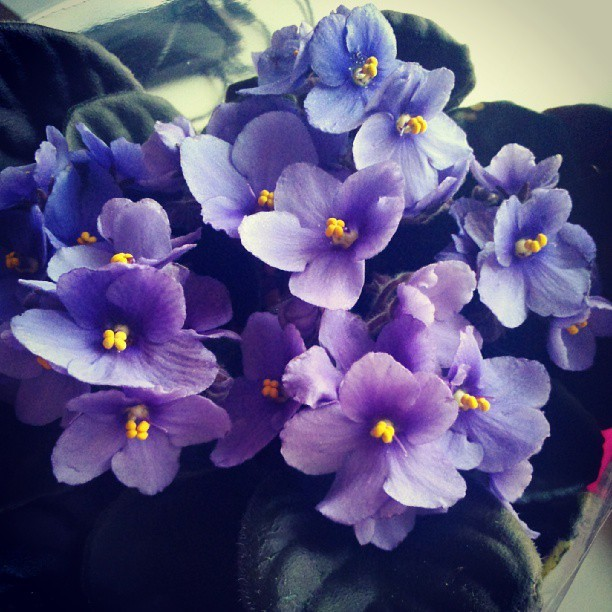 Flowers from my mum. #instagramers #instadaily #iphonesia #webstagram #latergram #like #flowers #throwbackthursday #tweegram #onedirection #artsick #instamood