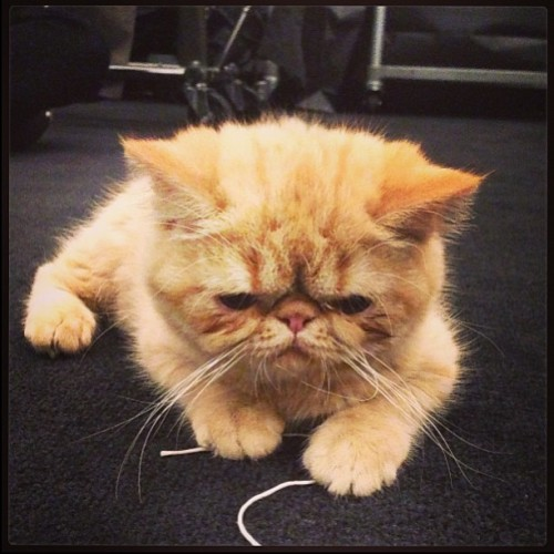 kemalandkarla: @justinbieber 's adorable cat Toots is helping us with his Billboard Awards alterations