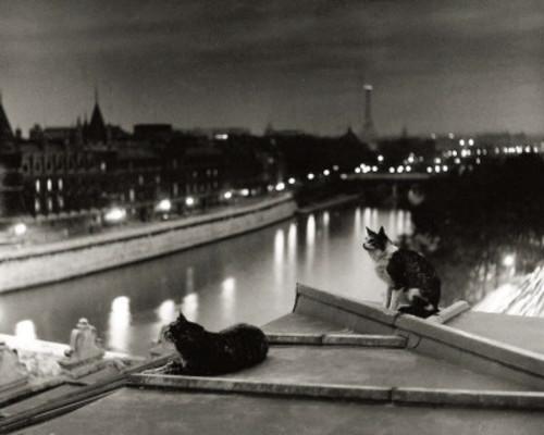 mimbeau:  Robert Doisneau Paris at night, cats on the roof 1954