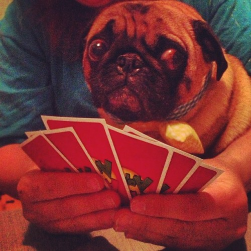 Playing cards with milo
