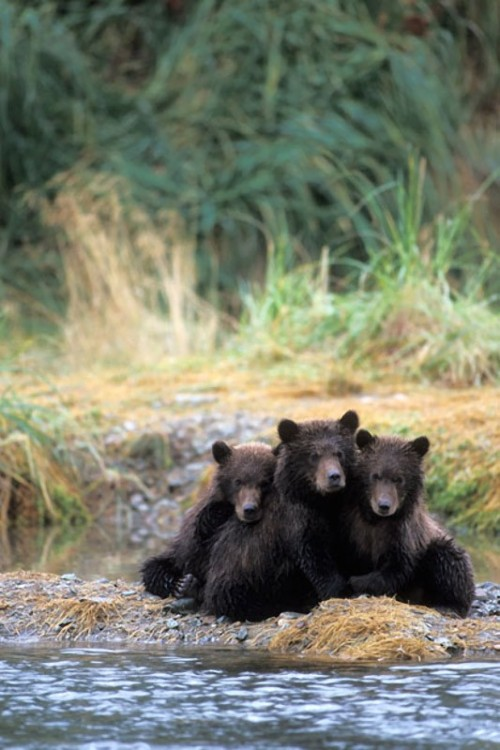 llbwwb:  Still waiting for Mom by Steven Kazlowski / Barcroft Media)