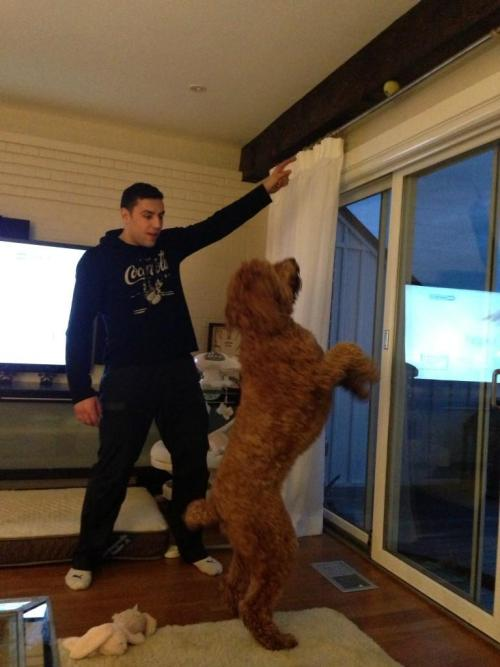 Milan Lucic and his dog, Buddy (Source: @MilanLucic4)