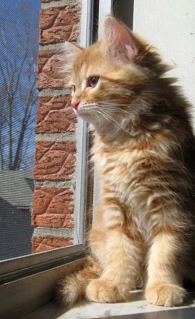 Zippy at the Window by elycefeliz on Flickr.