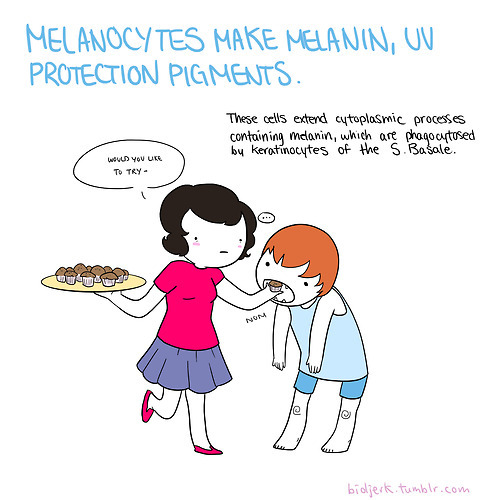 bioljerk:  Some cells found in the epidermis.  Cute little cartoons representing some common dermal (skin) cell types. More from bioljerk here!
