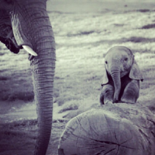 Mother and baby elephant. So adorable