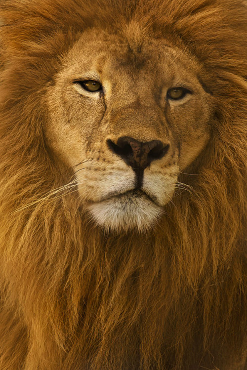 the-natural-world:  The King by `Kendra-Paige