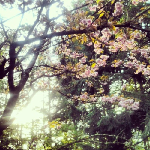 originalleeech:  Blossoms are cool.