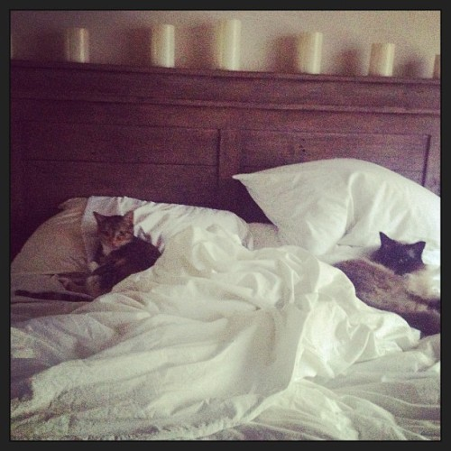 #cats caught in #bed