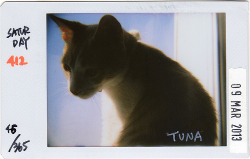 ★37 Project★ 046/365**412 on Flickr.Tuna.