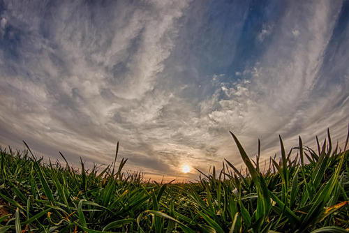 wheat field sunset - explore # 1 by Marvin Bredel on Flickr.
