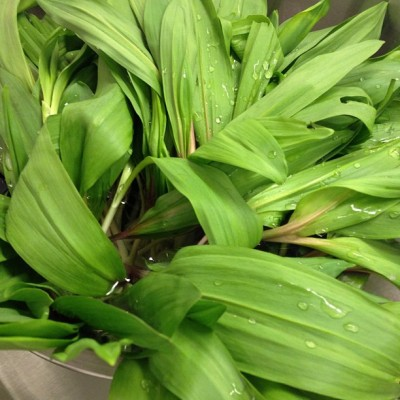 It's Ramps madness!😋🐼