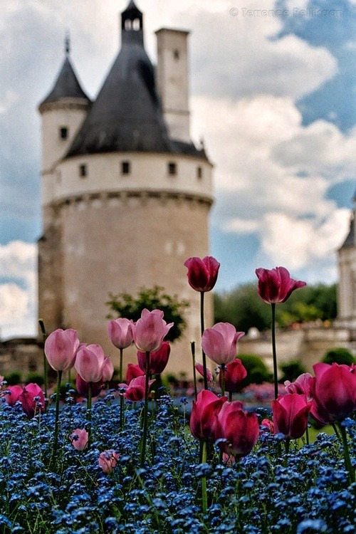 littlepawz:  Springtime at Chateau Chenonceaux, France