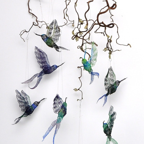 Ghosts of Endangered  Hummingbirds  by Anita Bruce