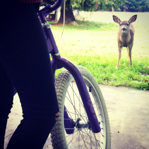 Trying to teach Bella to ride a bike…our little friend however doesn't want us to do anything but come play with her…and bring apples
