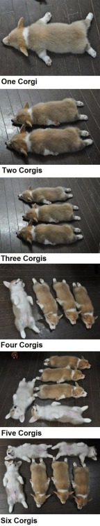corgiaddict:  corkidorki:  Counting with Corgis This is old, but it gets me every time. All children should learn to count to 6 using this method.  Corgi counting photos were taken by Sirowan, Goro's corgdaddy.