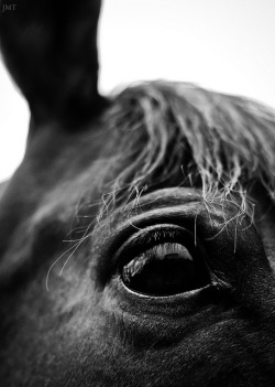 thoroughbred eye on Flickr.