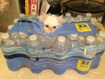 catsamazing:  Just us Bottles of Water here, Move along humans