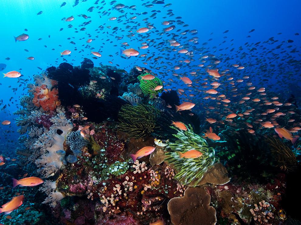 Komodo Island Movie Komodo Island Indonesia