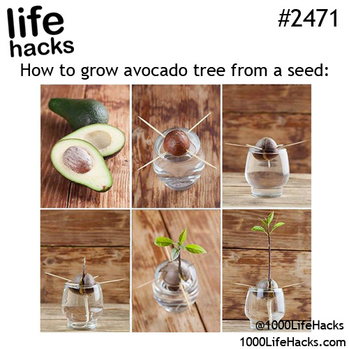 Cool food home diy hack hacks life hacks do it yourself Cool household hacks