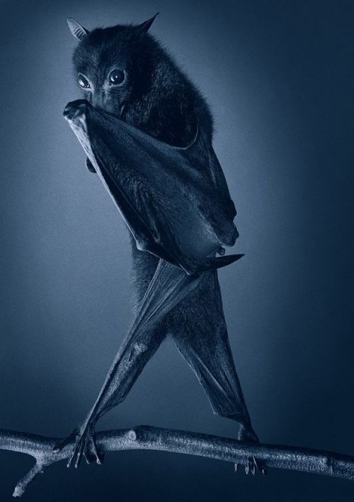 explore-blog:  More Than Human – Tim Flach's extraordinary portraits of animals.