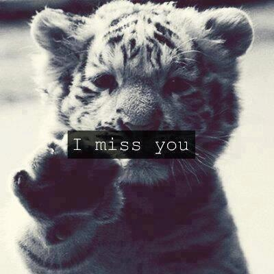 Tigerrrr :x | via Facebook on We Heart It - http://weheartit.com/entry/59817813/via/scorpie   Hearted from: https://www.facebook.com/photo.php?fbid=503715603021503&set=pb.321940311199034.-2207520000.1367147055.&type=3&theater