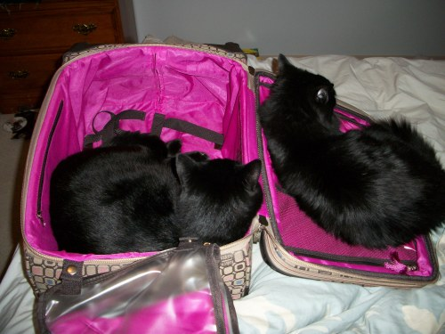 "getoutoftherecat:  ""Can we come?!"" no."
