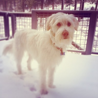 My beautiful snowflake ❄❄❄ #dog #puppy (at Northstar California™ Resort)