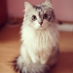 #cat #kitten #cute #pet #animal #ezzardesire
