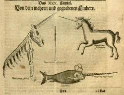 Unicorn Versus Narwhal Michael Bernhard Valentini's Museum Museorum (Frankfurt, 1714), via the Internet Archive.