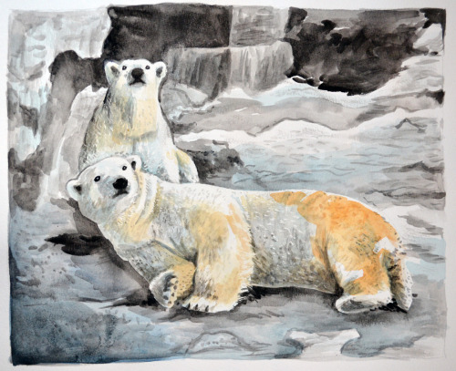 """Pet"" portrait—polar bears!"