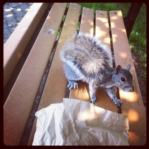The squirrel in this town are not shy at all. #squirrel #parkbench