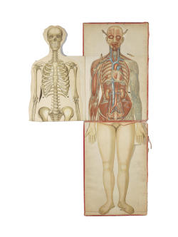 Life-size multi-layer printed female anatomical figure, circa 1910