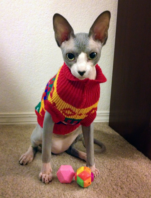 Hugo's holiday sweater from his Uncle Pacifico.   http://pacificosilano.tumblr.com/ (Maybe NSFW) http://iggyminaj.tumblr.com/ (Hugo's cousin Iggy, tuxedo brothers from different mothers)