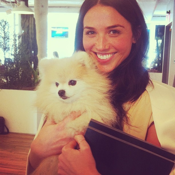 "laneycrowell:  At @Tumblr with the ""most famous dog in New York"" #tommypom (at Tumblr HQ)"