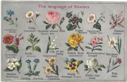 disposizionedolce:  The language of flowers, sometimes called floriography, was a Victorian-era means of communication in which various flowers and floral arrangements were used to send coded messages, allowing individuals to express feelings which otherwise could not be spoken.